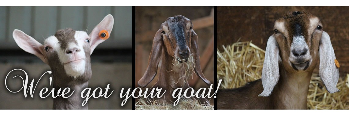 We've got your goat!