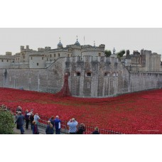 Tower of London Poppies (Large Print)